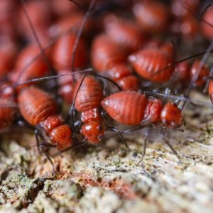 Why Are Termites Inspections a Good Idea?